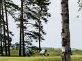 DSCF2077_golfifoto_veeb_kadri-palta